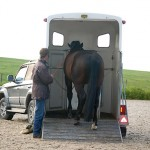 Friese paard in trailer